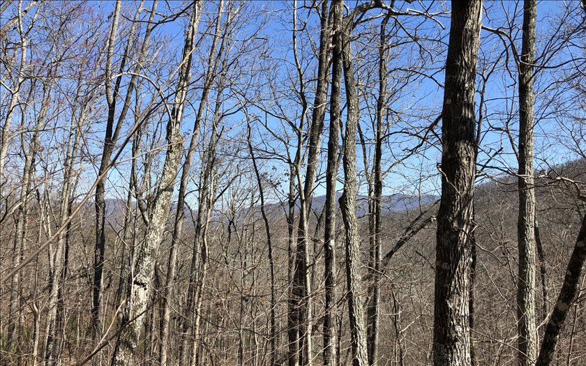 LOT51  OVERLOOK AT YH