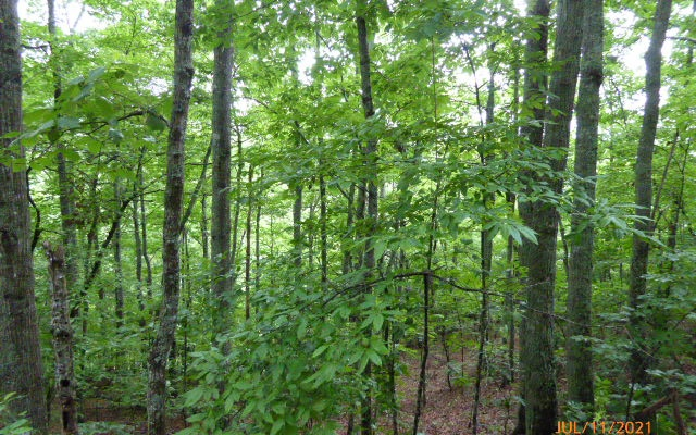 PENLAND INDIAN TRAIL, Hayesville, NC 28904