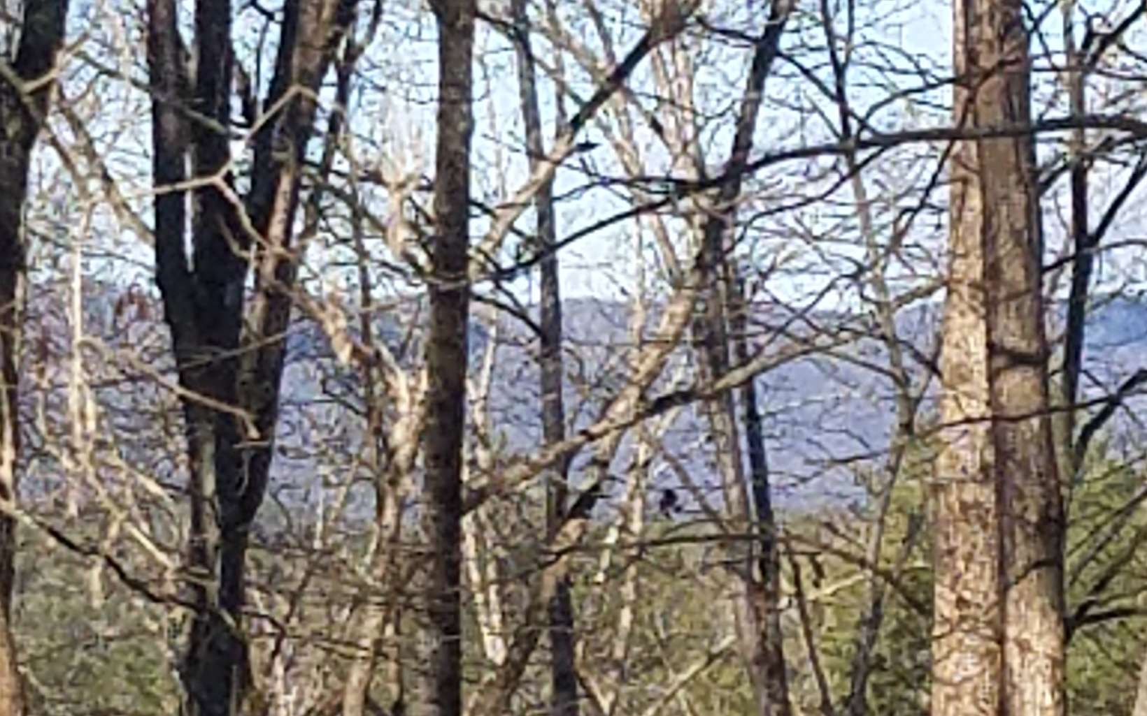 Long Range Mountain View year around w/ tree topping!!! in gated Coosawattee River Resort w/amenties: Tennis, Clubhouse, Pavilion of River for you enjoyment, ponds, etc.!!!!! Less than 5 miles from Quaint desirable town square. (soil test completed)