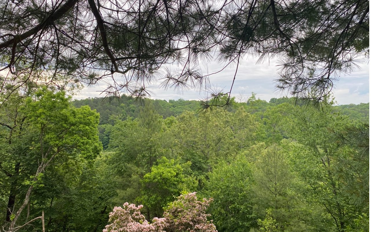 TOCCOA RIVER FOREST