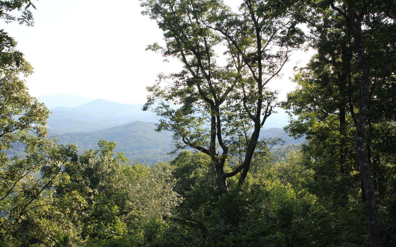 4J  MOUNTAIN HARBOUR