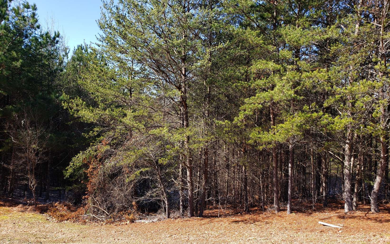 Gentle Buildable lot with paved road frontage & City water available. Nice homes in the area. Easy Access, Perfect for a starter Home. Tell your builders!!