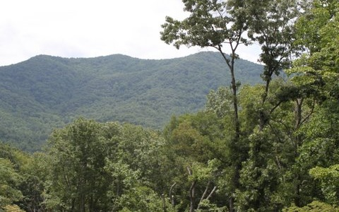 MOUNTAIN VIEWS OF COHUTTA NATIONAL FOREST!!! Layers of protected mountains to picture. This beautiful wooded lot borders the Cohutta National Forest as most of the development. Common area & post office reconstructed 1881 cabin. Gated community & Paved Roads. A one of a kind community!!! Less than 10 mins. to Jacks River and Conasauga Lake located with in the Cohutta National Forest. You ready to see wildlife, hike and trout fish; then this is the lot for you!