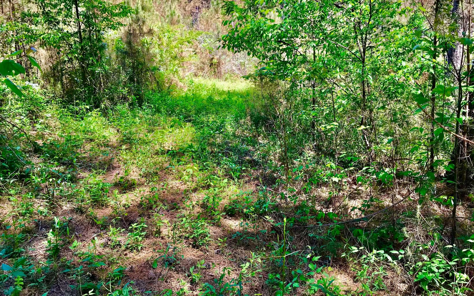 LOT10  EASTVIEW TRAIL