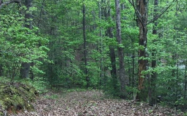 Private lot with mature hardwood trees in a quaint community with a common area and pond. Already has soil test done, driveway is installed, community water is available. Minutes to everything the North Georgia mountains have to offer, historic downtown Blue Ridge, dinning, shopping, Toccoa River, Lake Blue Ridge and several hiking trails.
