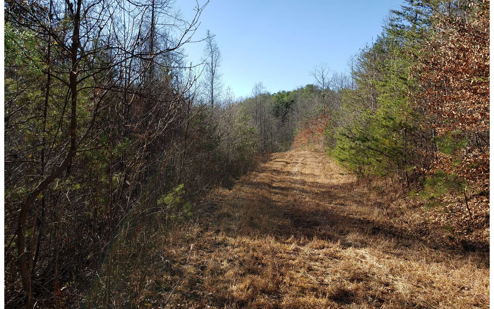 6.44 Acres with Branch running thru property. Septic Tank and Private Well are all set. A 32 Ft. 5th Wheel on property now. Outbuilding with electric. Paved Road Frontage and Centrally Located Between Blue Ridge and McCaysville. Close to Schools, Hospital & Shopping. Within 5 miles to Toccoa River, Downtown Blue Ridge and Blue Ridge Lake.