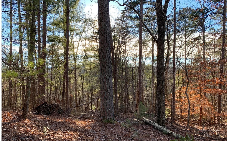 1684  SHADE TREE